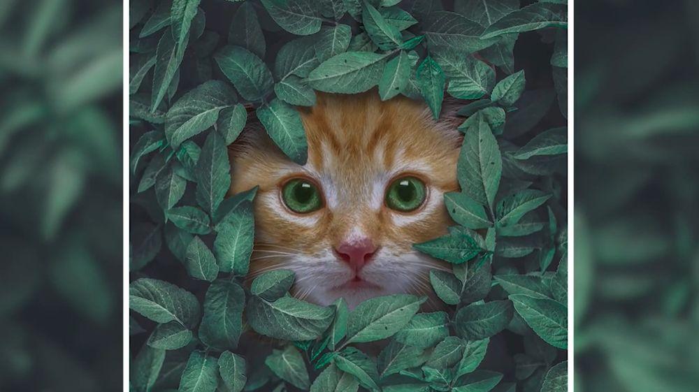 cat-behind-the-leaves-tutorial2